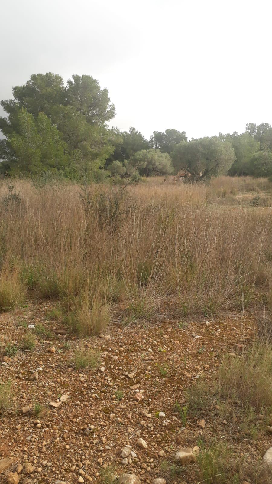 Land -                               Mont-roig -                               0 bedrooms -                               0 persons
